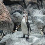 鳥羽水族館_ペンギン
